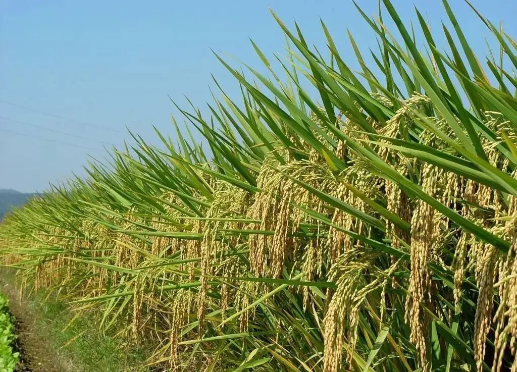 【案例分析】同样的农产品,为啥别人能卖得更贵?