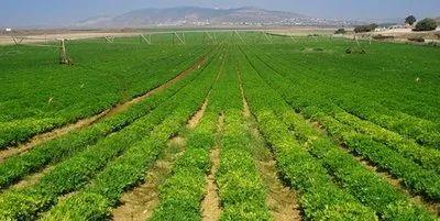 """【报告】未来十年农业大""""势""""如何?——解读《中国农业展望报告》"""