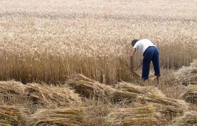 【行业分析】我国农业到底为啥不挣钱?揭开中国农业真面目,带你了解中国农业