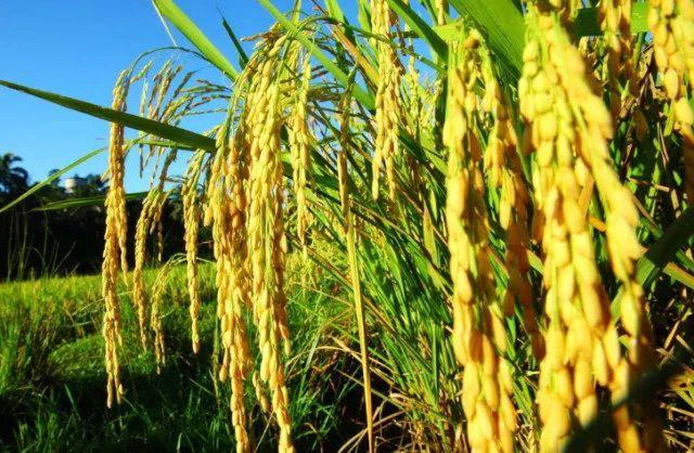 【科技改变农业】中国农科院发布2017-2020年十大科研进展