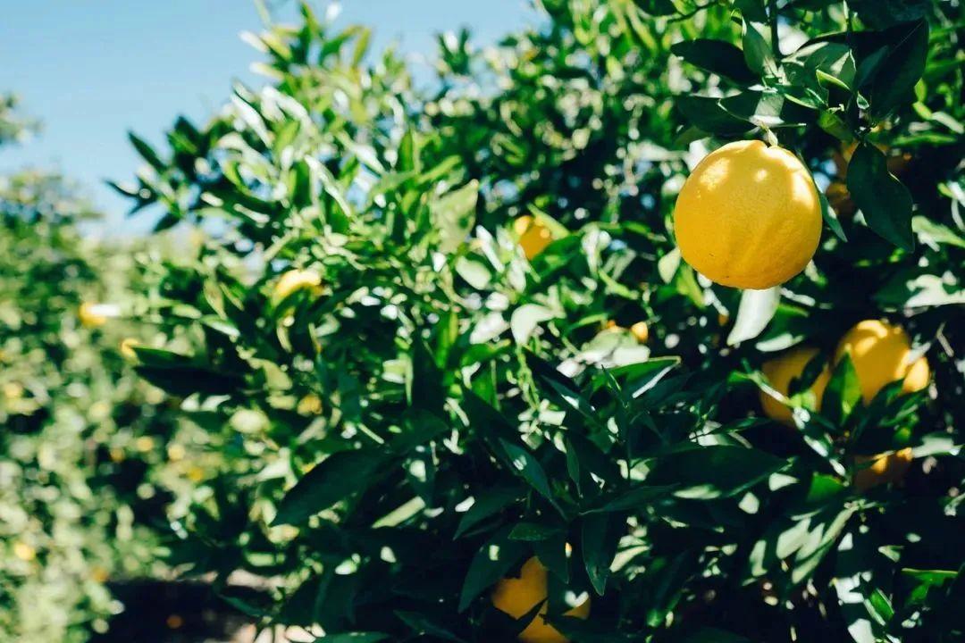 【干货分析】】农产品如何突破低价值、同质化?这样做增值三倍以上!