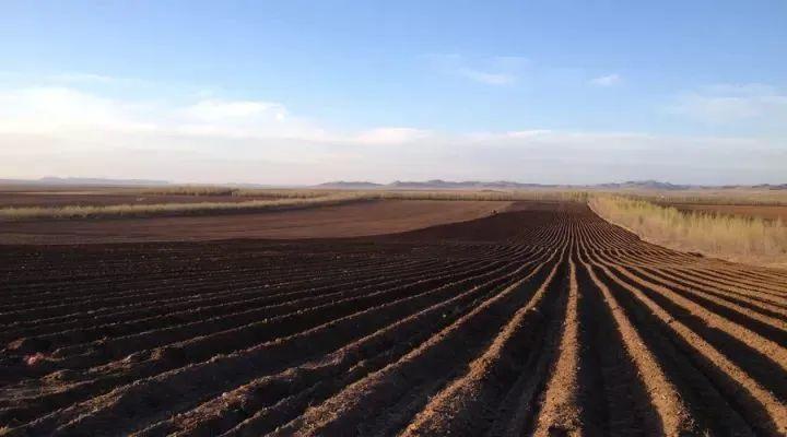 【行业分析】中国农业为什么没有竞争力?