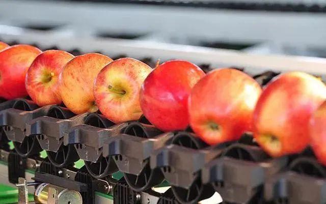 或又是一次行业变革!阿里、百果园带头搞农产品品质分级、机会大于挑战