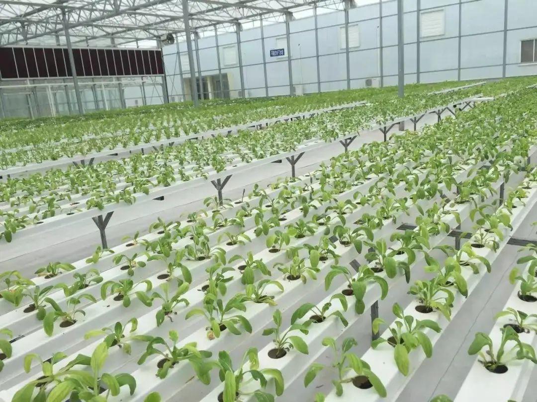 三农日报|政策:数字产业化推动品牌农业发展;中国农产品出口将遭遇4大难题