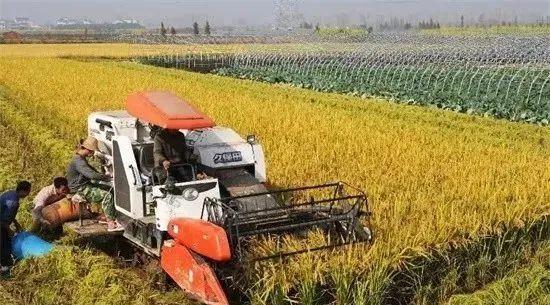 【深度观察】粮食战争:一场30年的阳谋,一次中国农业千年史的变革