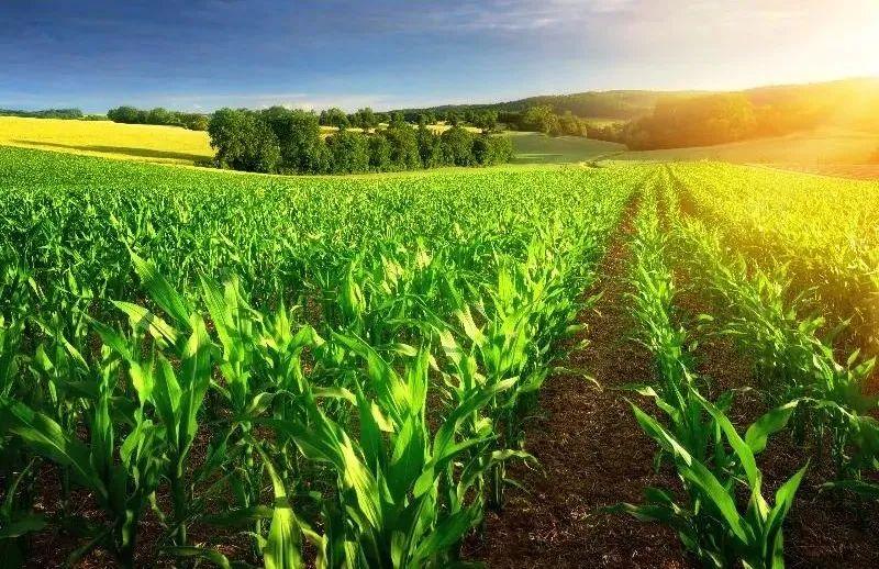 三农日报| 中国农业必须走高质量发展之路;外媒:中国禁止进口德国猪肉