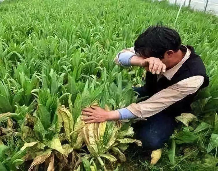 【经验教训】阵亡率90%,做农业,这些血淋淋的教训千万别再犯