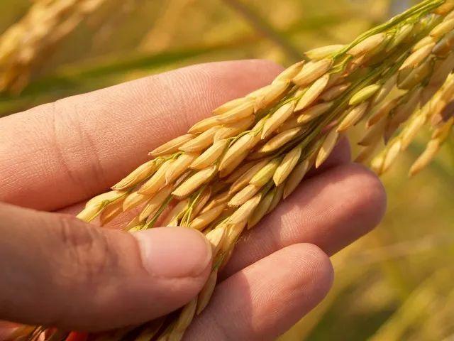 【实操案例】如何成为品类的王者,从同类农产品中脱颖而出?