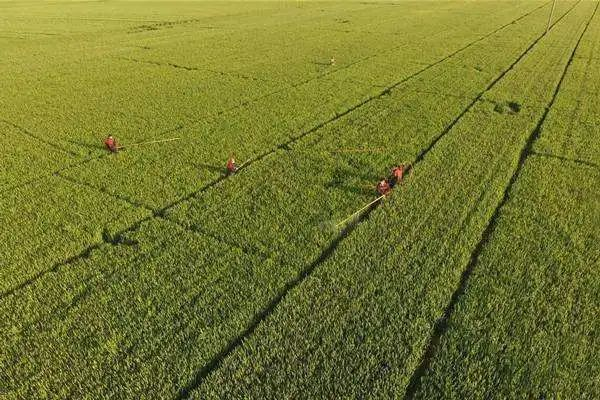 【政策】自然资源部:农产品深加工、农家乐等用地,不属于设施农业用地范围