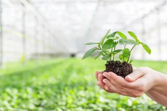 三农日报|农业农村部:提高国产大豆竞争力;券商:转基因是中国农业新增长点