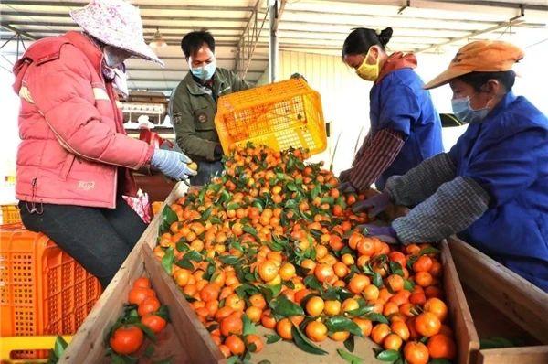 万字雄文!我国农产品加工战略研究:挑战与机遇并存
