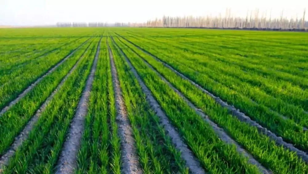 【经验复盘】农业看似利润高,但是不赚钱!