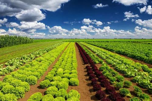 【新农业】罗必良:从产品性农业到功能性农业