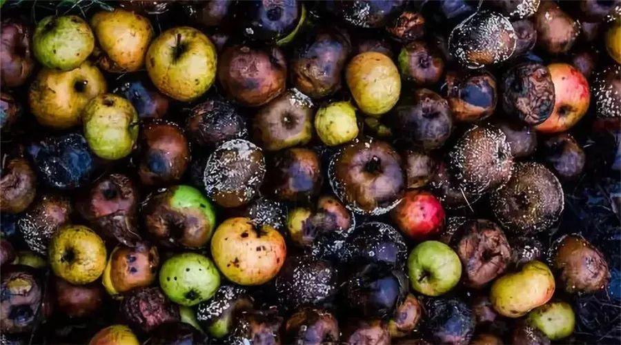 """【深度剖析】我国一年损耗的果蔬过亿吨,国产果蔬""""牺牲惨烈""""现状如何改善?"""
