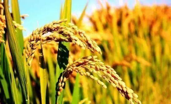 【行业剖析】国际地理标志农产品保护模式及启示