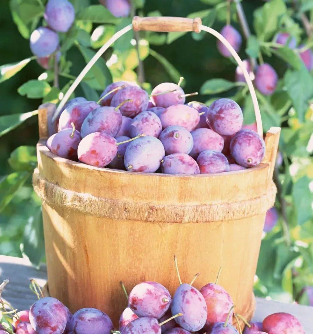 【商业案例】如何通过社群,使水果销量倍增?(附案例)