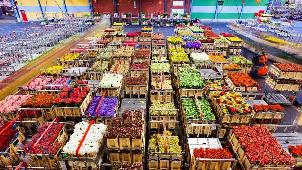 【海外农业】国外农批的运营模式及其特点