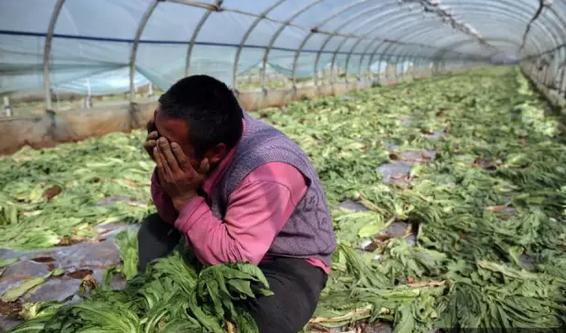 云南蔬菜出现滞销 新发地董事长张玉玺讲透农产品流通的大玄机