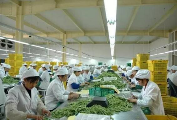 农产品加工业怎样赚到钱?农业部这11个实问实答不得不看!