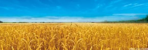 报告预测:未来大豆市场将会大爆发