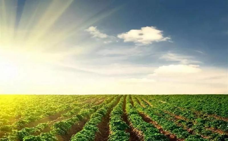 农业失败案例|农业创业已入死循环:不继续投入,就得倒闭或亏钱