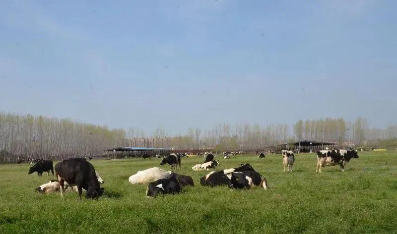 农业全产业链,到底如何打造?