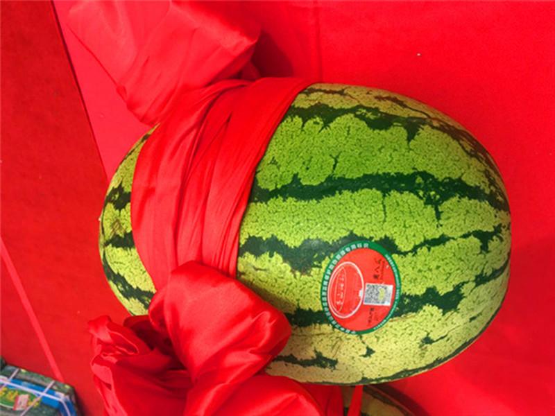 保品质  树品牌  稳增收 中卫市沙坡头区硒砂瓜品牌保护新闻发布会