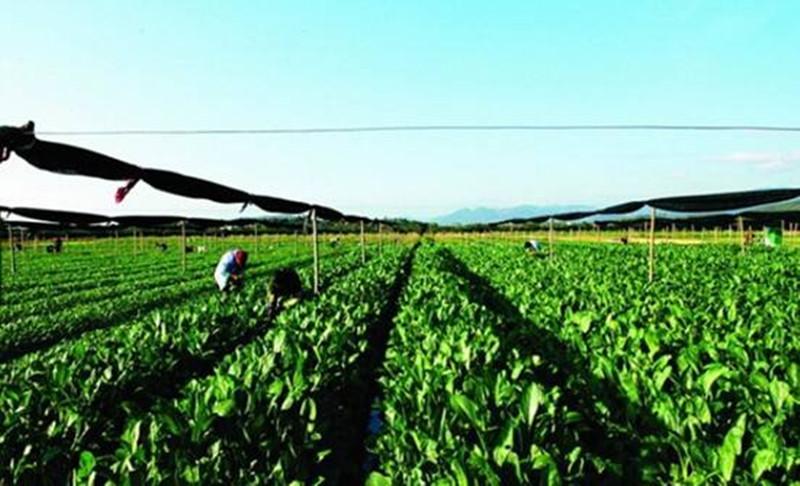 """坚持就是胜利,品牌农业不能做短命""""网红"""""""