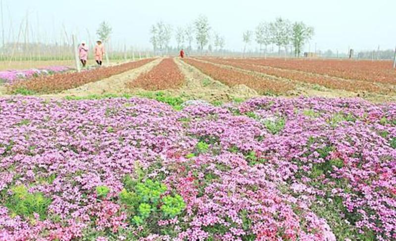 品牌农业的五个特征和八大法则