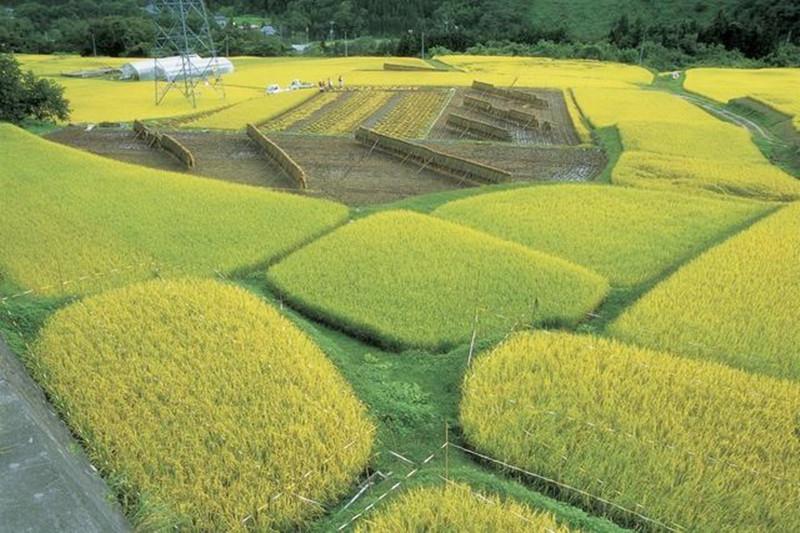 结合美日经验论中国特色农产品品牌建设策略