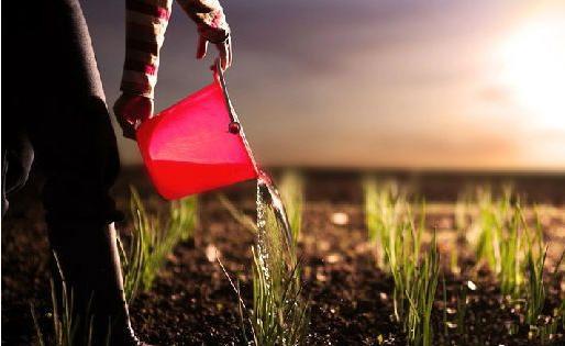 农业投资 疯赚千万突破点在哪?