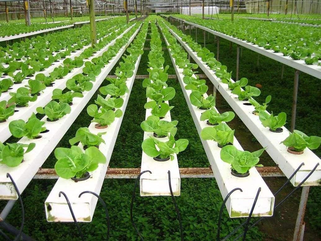 三农日报|区域农产品品牌迎来大爆发;蔬菜大棚或获政府扶持