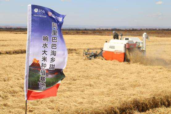 首个中国农民丰收节:阿里、京东、苏宁、中国邮政纷纷出招