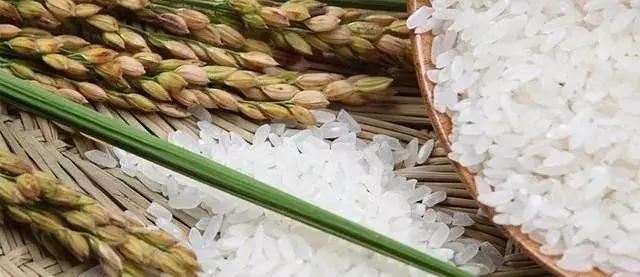 农业农村部宣布:品牌强农应该这么干!