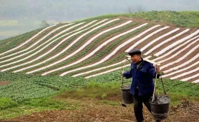 重磅| 中国农业发展的未来战略:大农业 大食物 大格局 大品牌