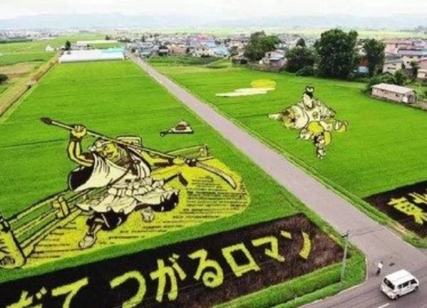 日本农业为啥说值得我们学习?