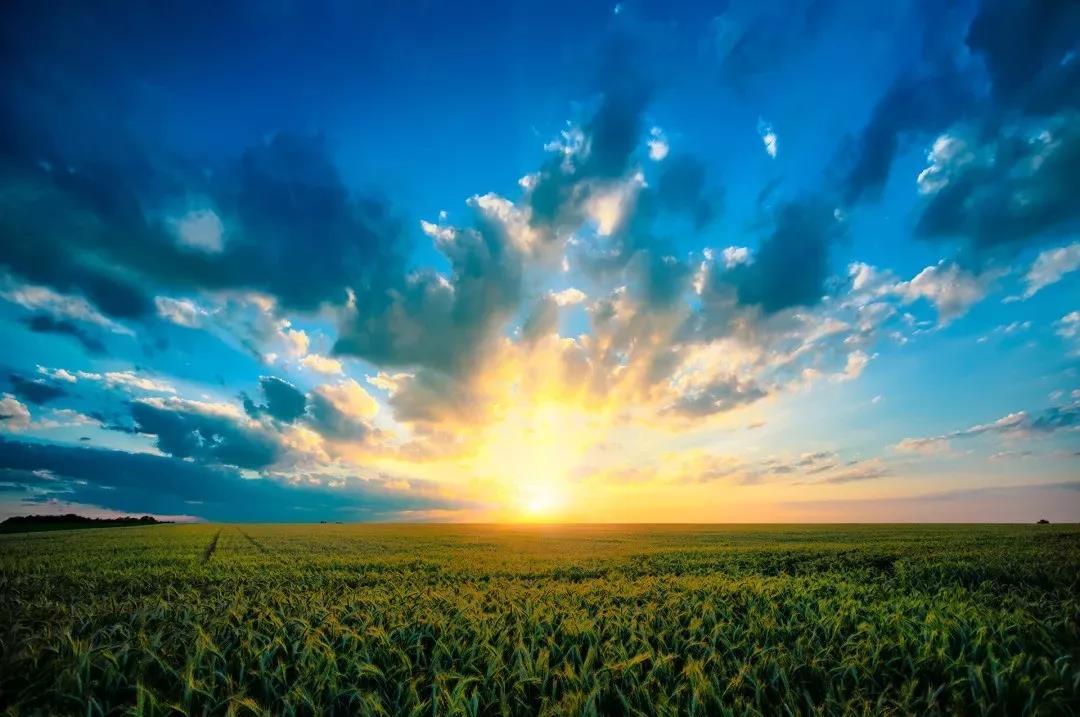 「品牌营销」拆解农业领域2019年度10大关键词:做农业不能裸奔