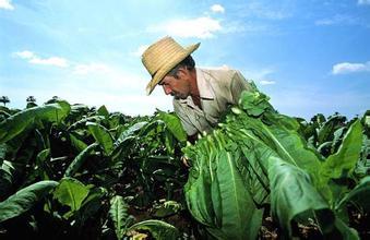 农业部:15亿元支持绿色高产高效创建
