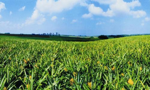 品牌农业将会成为未来五年中国最大的财富商机!你知道吗?