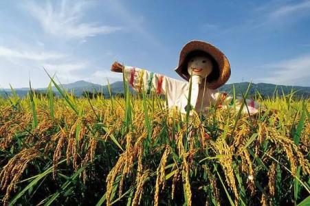 """互联网农业:农产品品牌化才是销售""""大赢家""""!"""