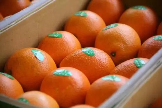 品牌化趋势不可独挡,如何快速打造农产品品牌?