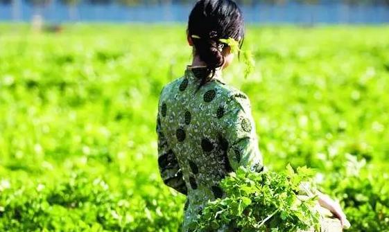 那些品牌农业的农产品是如何打造品牌,一步步做大的?