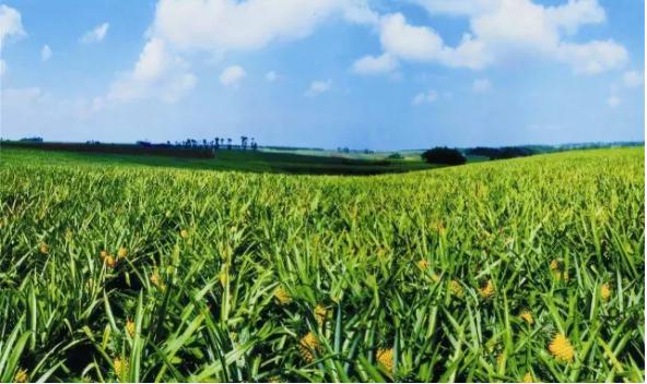 李剑:中国农业品牌之痛(上)
