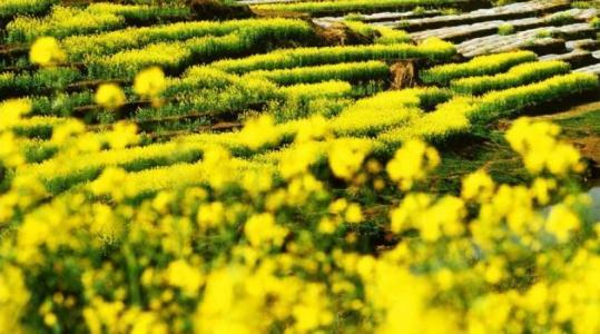 农创人必读:农业创业赚钱的十个模式