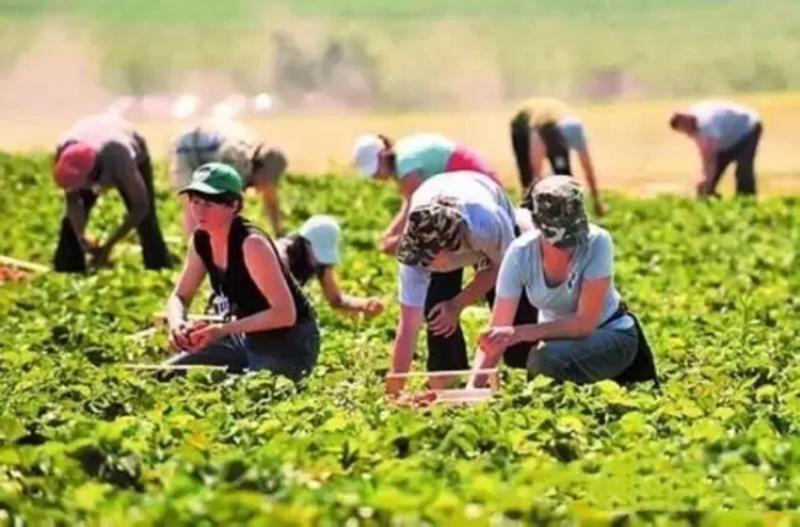 农业营销 | 休闲农业如何玩转新媒体?