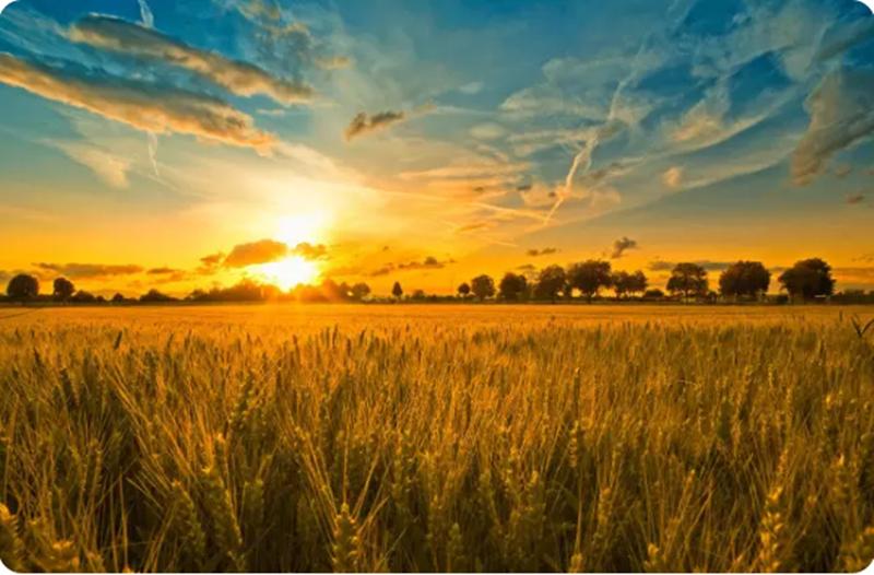 农业营销丨局部入手,决胜全局 