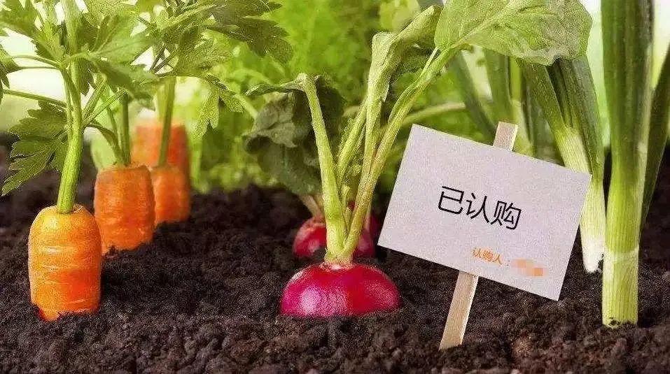"""【新模式】浅析""""认养农业""""的营销方法,""""订单式""""生态农业可以梦想成真"""