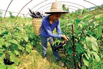 互联网+农产品,你知道营销出路有哪些吗?