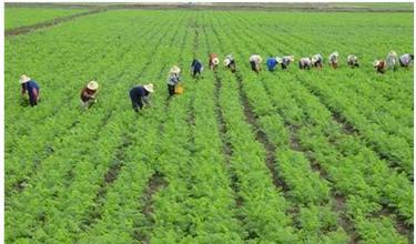 未来农业营销发展方向在哪?