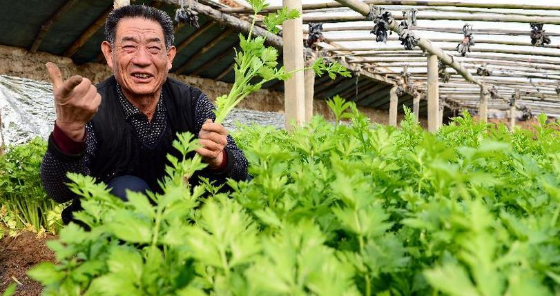 生态循环农业成国家发展重点,哪些经营主体将成扶持对象